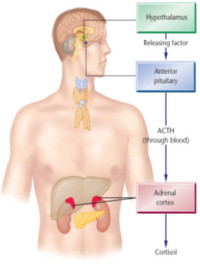 cortisol_image