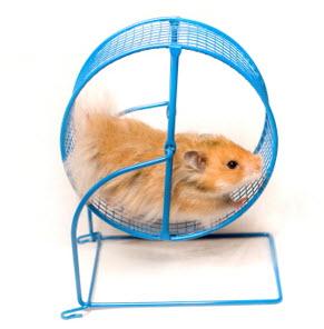 hamster-brain